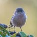 Sweet visitor by nicoleweg