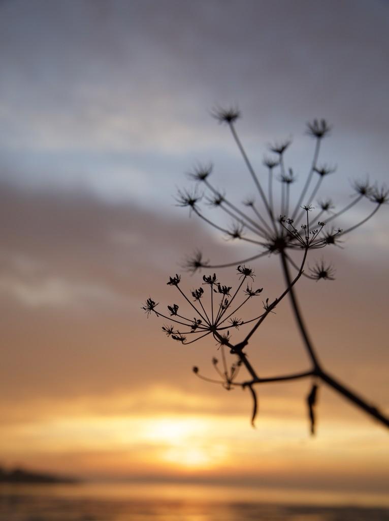 Sunset by gapandgain