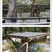 Koala Shelters