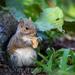 See -- my cracker has seeds!