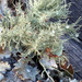 Painted lichens...