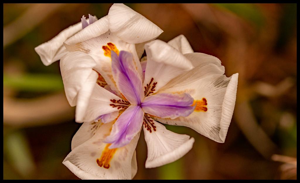 Flower! by rickster549