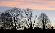 1st Dec 2020 - Trees and chimneys