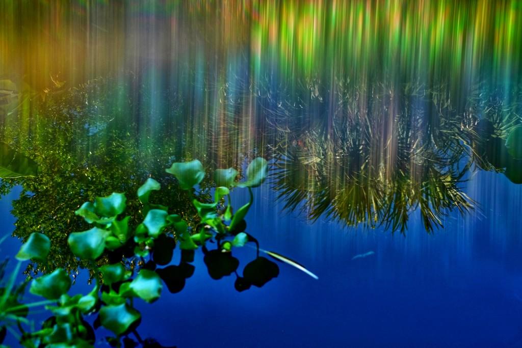 Lilies (?) by joemuli