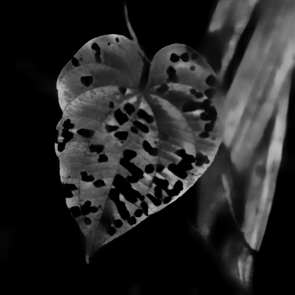 Heart attack  by joemuli