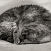 Curled up Cat by vignouse