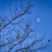 Daytime Moon by k9photo