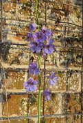 5th Dec 2020 - exceptionally late delphinium