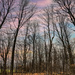 Leafless forest by sprphotos