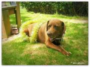 6th Dec 2020 - Milo.. The Grand dog...