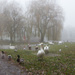 Foggy day in the park by busylady