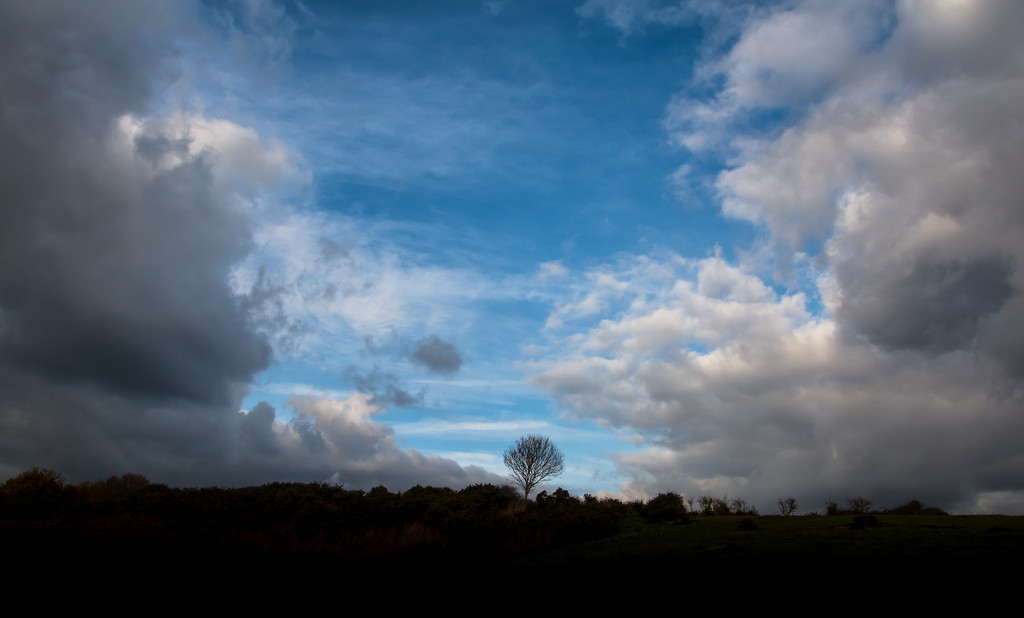 A Tree at Minsmere by ilovelenses