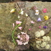 December flower grid