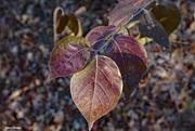 6th Dec 2020 - Fall leaves