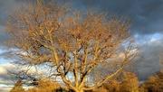 5th Dec 2020 - Warm colours of an autumn evening