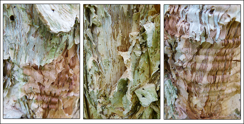 Melaleuca Bark Triptych by onewing