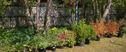 10th Oct 2020 - Backyard Planting
