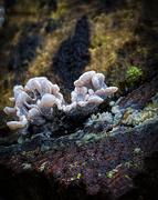 7th Dec 2020 - Baby Fungi