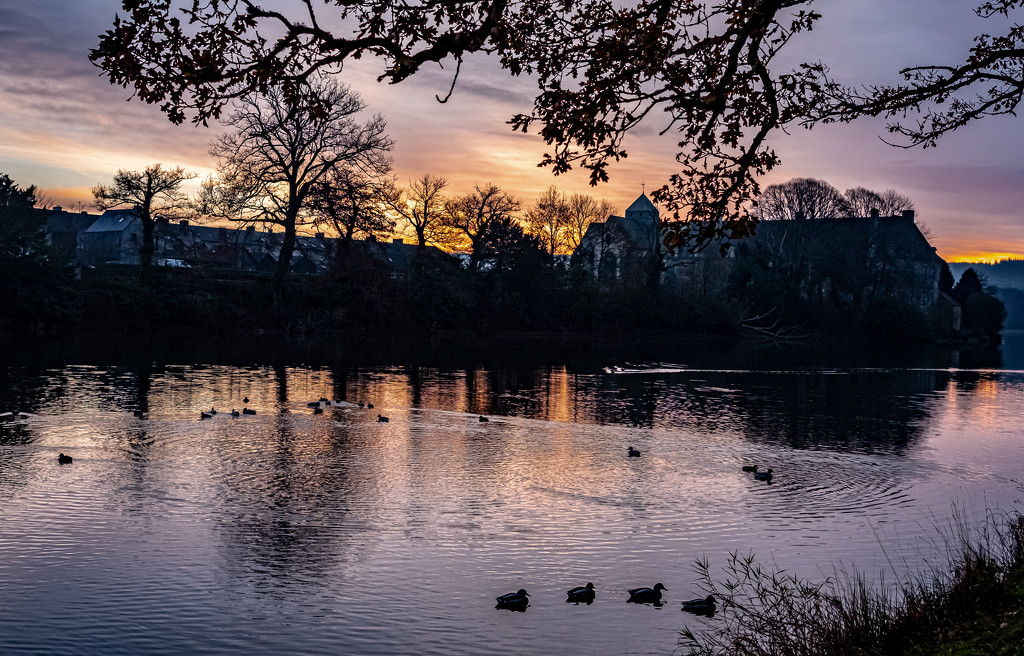 The Ducks Foregather at Sunset... by vignouse