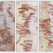 Scribbly Gum Bark Triptych by onewing