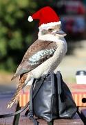 8th Dec 2020 - The 12 birds of Christmas