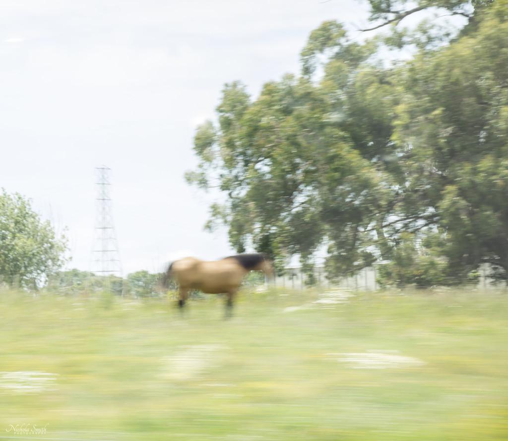 Horse by nickspicsnz