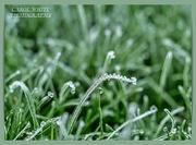 8th Dec 2020 - Frozen