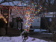 8th Dec 2020 - An outdoor tree with blinking lights
