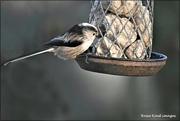 8th Dec 2020 - Gorgeous little bird