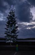 8th Dec 2020 - Scalloway's Tree