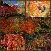 22nd Oct 2020 - Backyard Autumn Colors
