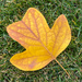 Leaf by shutterbug49