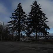 8th Dec 2020 - Trees on my Morning Walk