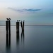 Dungeness Landing Co Park  Pilings with gulls 2-56 by theredcamera