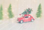 8th Dec 2020 - Oh Christmas Tree