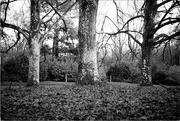 9th Dec 2020 - Symmettrees