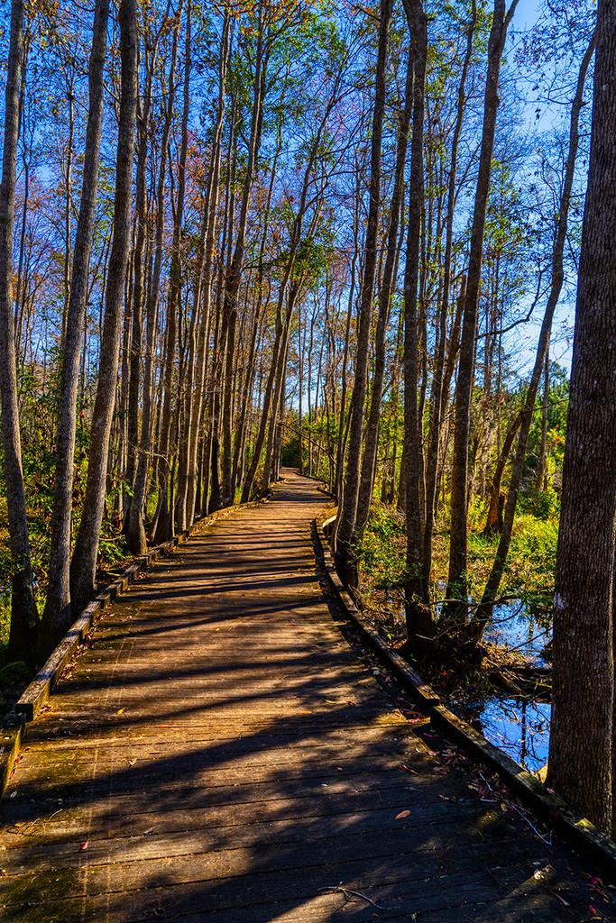 Swamp Boardwalk by k9photo