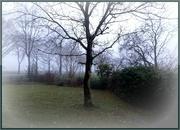 10th Dec 2020 - misty morning