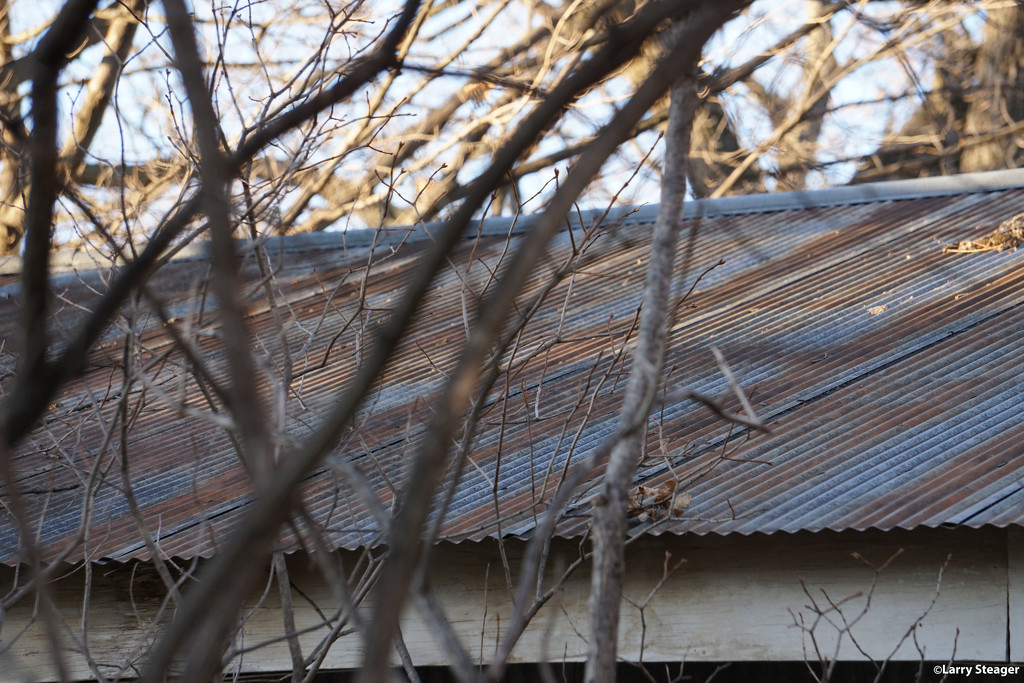 No cat on a cold tin roof by larrysphotos