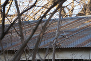 9th Dec 2020 - No cat on a cold tin roof