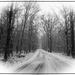 Snowy Day by olivetreeann