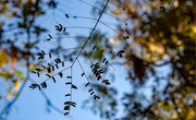 9th Dec 2020 - Little Leaves!