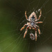 Under a spider with prey by maureenpp