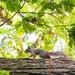 Elusive Squirrel by ninaganci