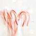 On December 10 by lyndemc