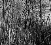 5th Dec 2020 - Dec 5th Reeds