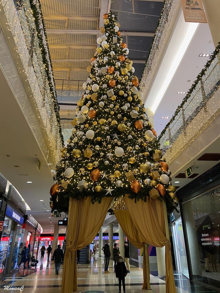 Christmas Tree by monicac