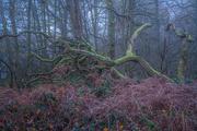 10th Dec 2020 - A Fallen Tree