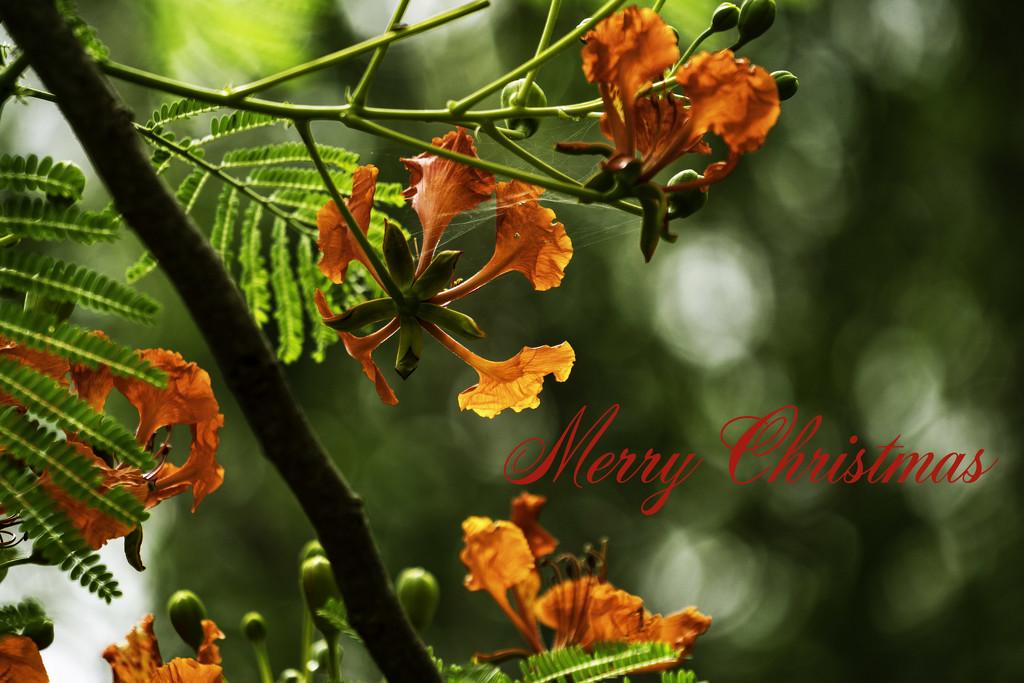 Merry Christmas  by sugarmuser