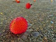 6th Dec 2020 - Covid berry?